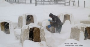 While it's tempting to do the bare minimum when temps are -17 with a -53 wind chill and there's 14 inches of snow on the ground, LuAnn was out feeding her calves at Troxel Dairy farm MORE frequently to keep up their energy reserves. Snow drifts also help insulate and inside the hutches they are cozy warm with fresh bedding.
