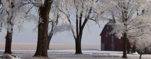 LuAnn Troxel captured this beautiful image at Troxel Dairy Farm. Behind the beauty was more snow and extreme temps.