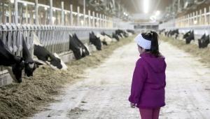 GL kids-cows