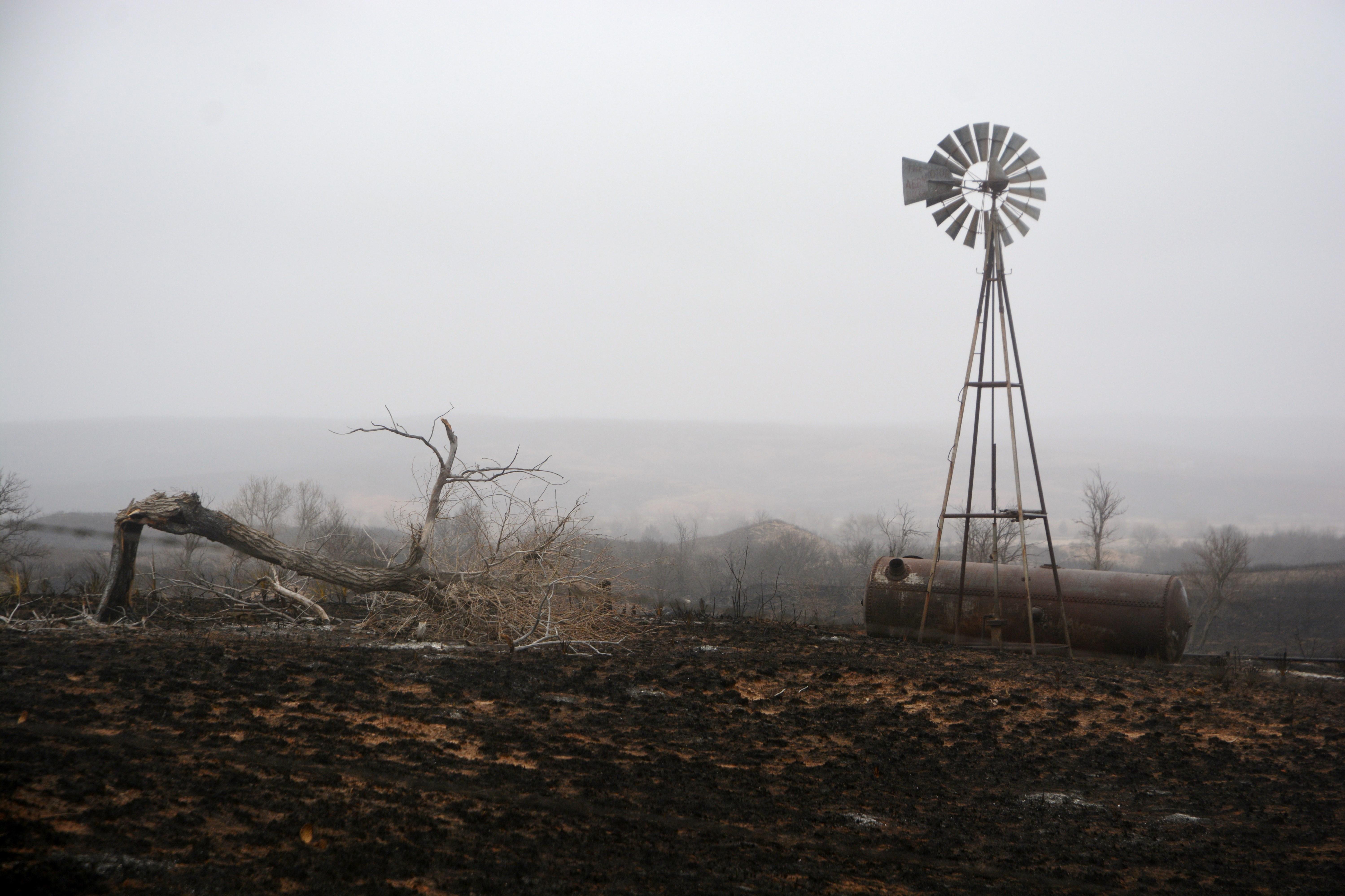 Texas3254(TAMU)