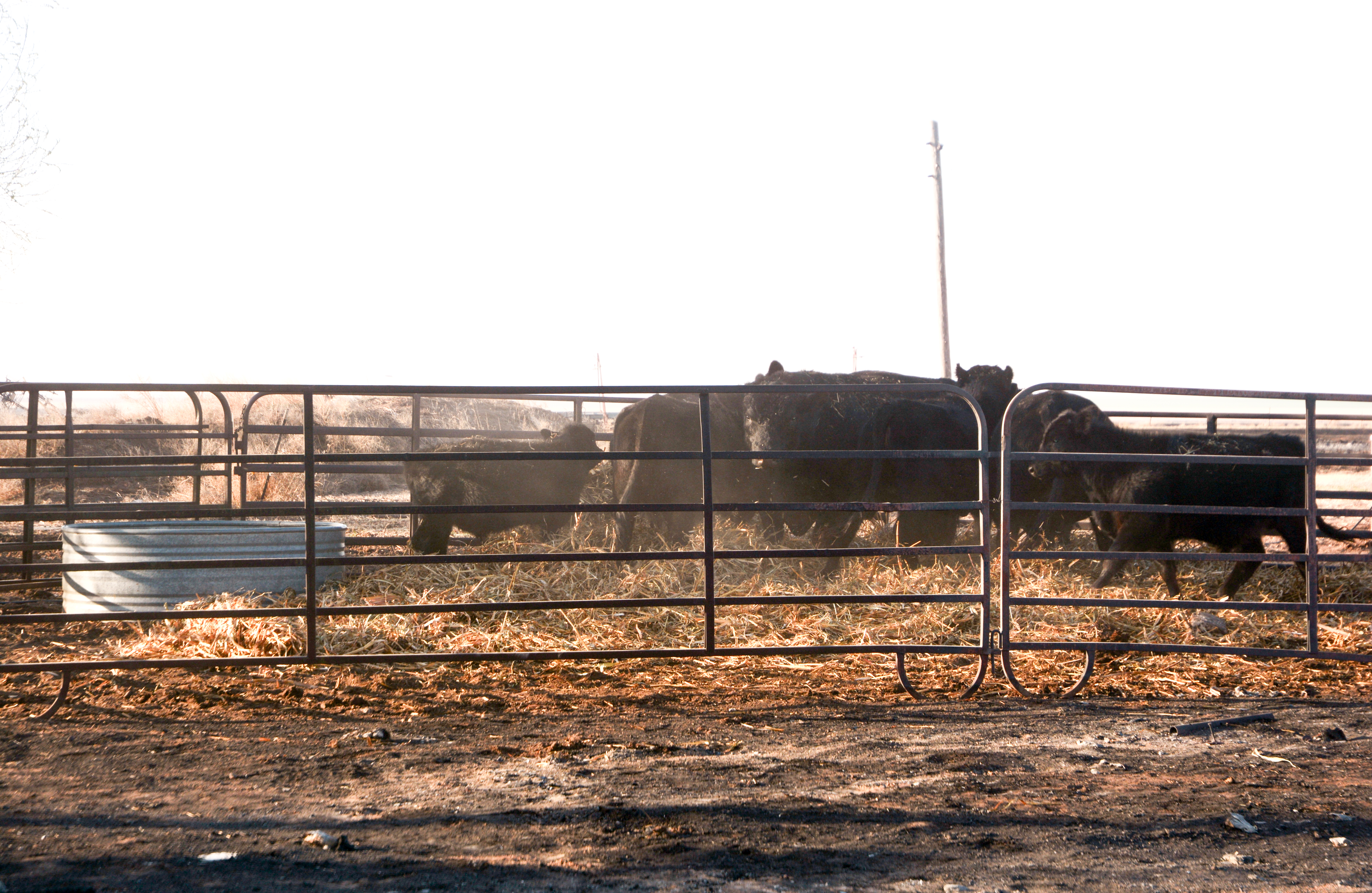 Texas3341(TAMU)