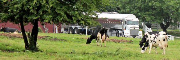 cropped-milktruck1.jpg
