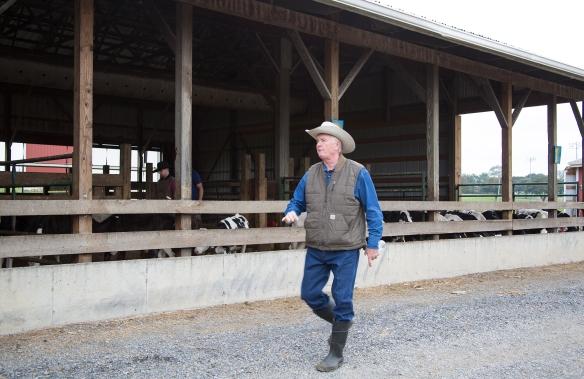 CattleHandling3818