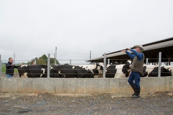 CattleHandling3858.jpg